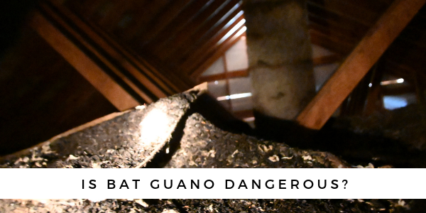 Bat-Guano-Dangerous-2019