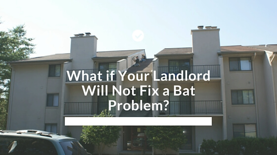 what if your landlord will not fix a bat problem 877 264 2287