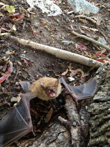 Bat Sounds: Hearing Is Believing - Get Bats Out - 877-264-2287