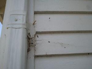 Bat guano on exterior wall