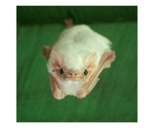 Fun Bat Facts