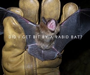 Rabid bat in Columbus, Indiana