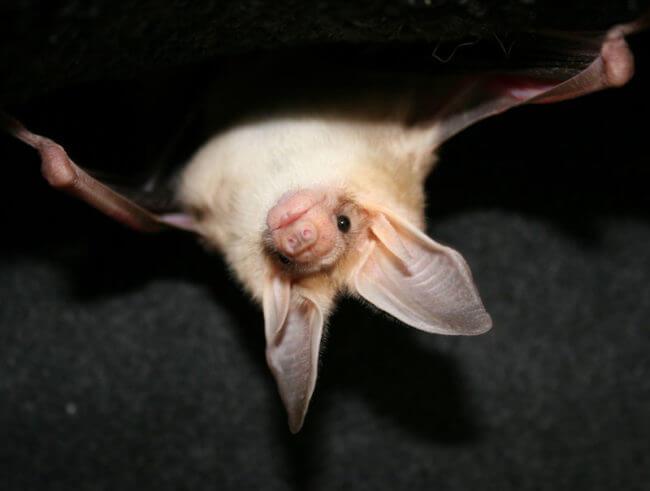 Rabies cases hanging around