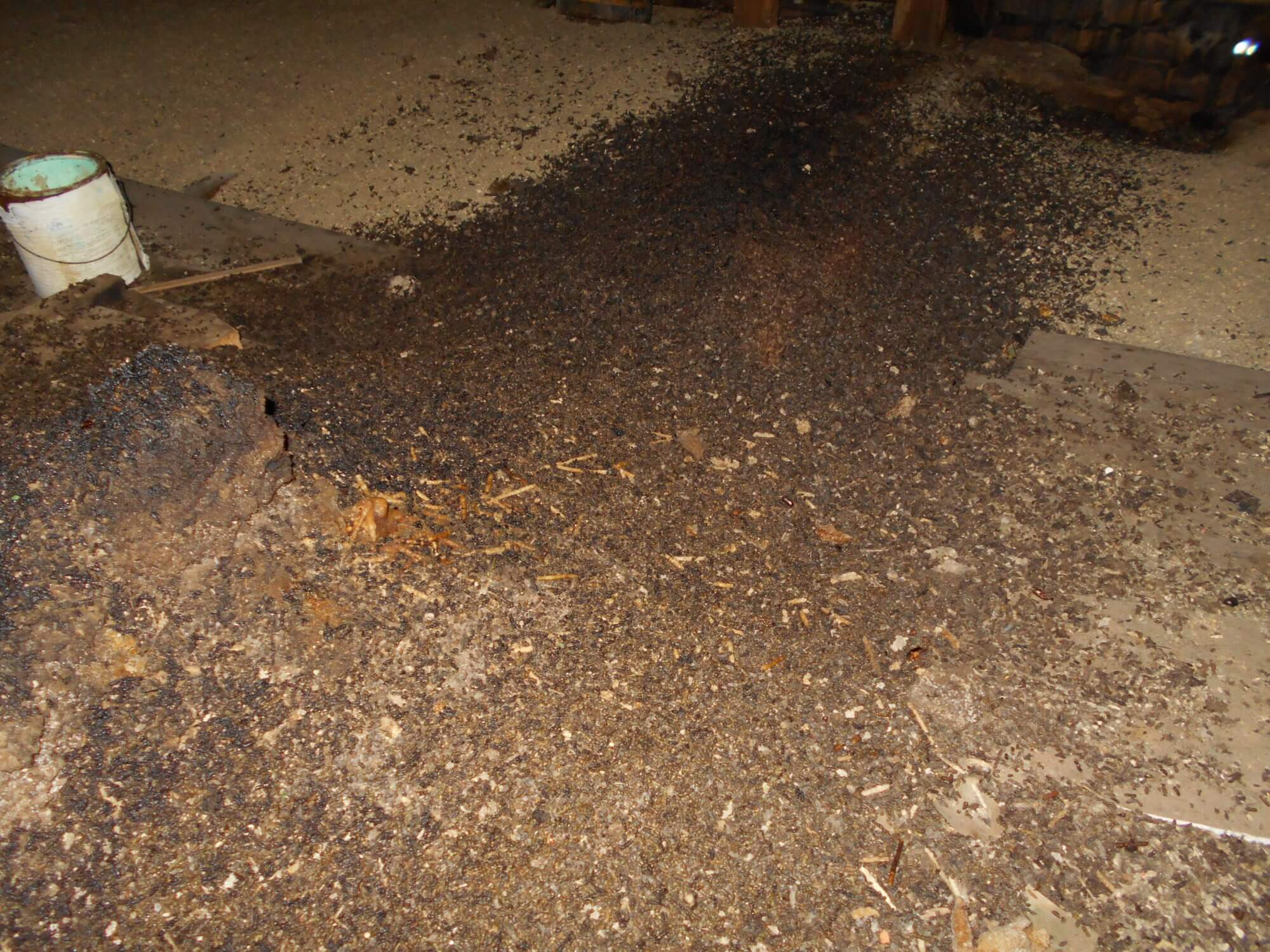Pictures of bat guano