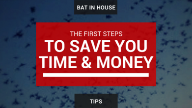 Get-Bats-Out-bat-in-house-tips