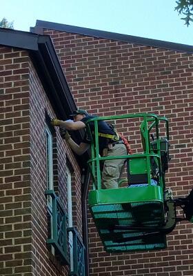 bat removal local technician