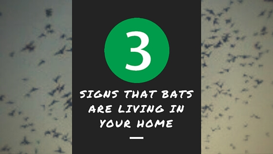 3 Signs That Bats Are Living In Your Home