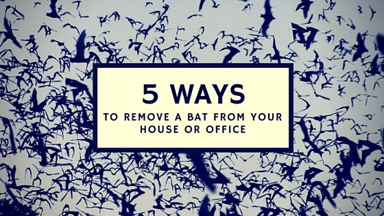 5 Ways To Remove A Bat From Your House Or Office