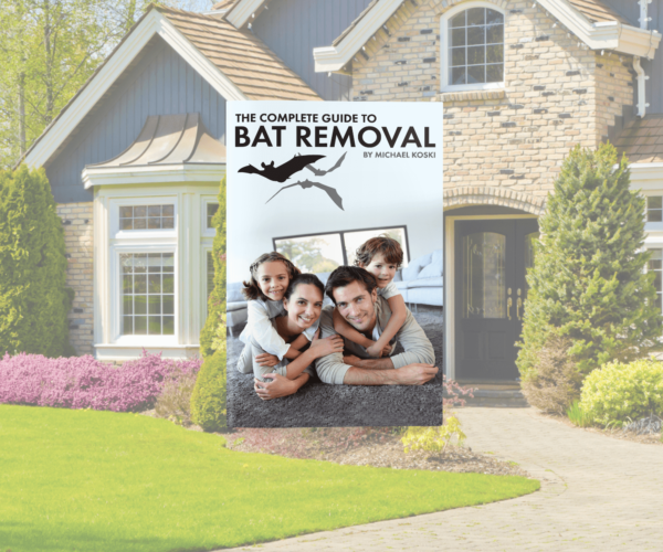 bat removal ebook