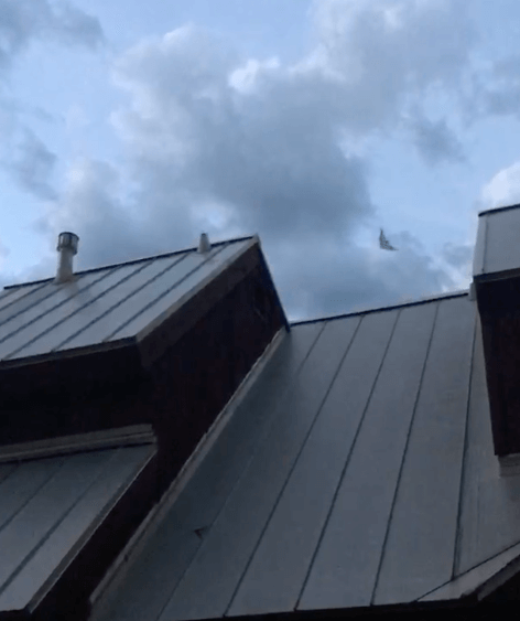 bats exiting house