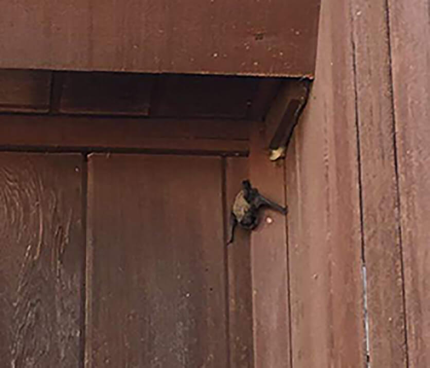 a bat hangs from the outside of a building