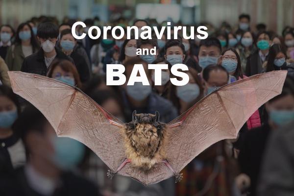 coronavirus-bats