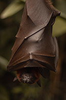 bat-hanging-from-tree