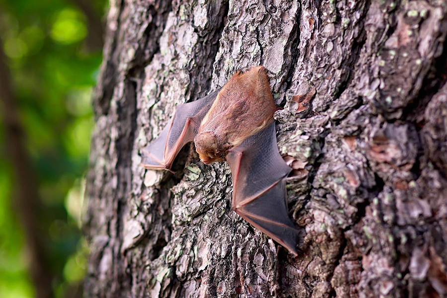 a bat outside grabbing onto a tree