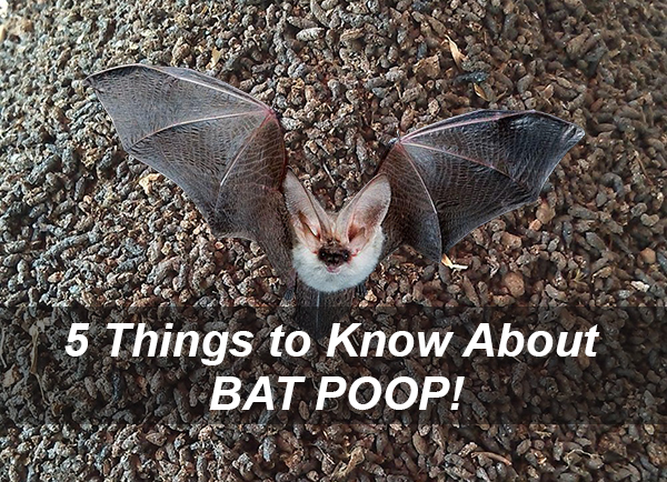 5 things to know about bat popp