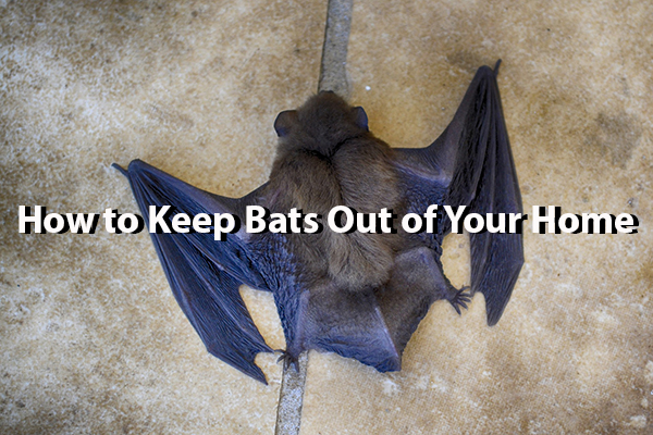 how do keep bats out of your home - a step by step guide