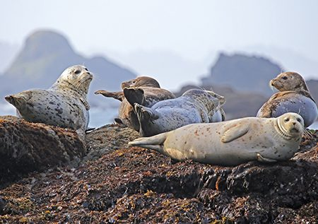seals and birds produce guano aswell