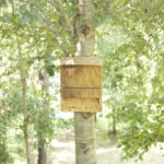 bat box on a tree a good distance from a home