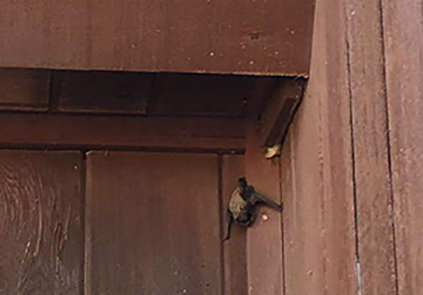 bat hanging from a deck