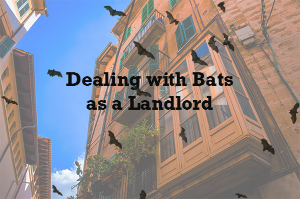 bats in an apartment building
