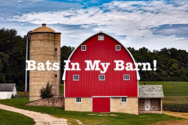 bats in a barn