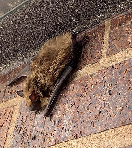 bat on brick wall on the outside of a house