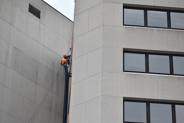 bat removal rope access technician on side of commercial building