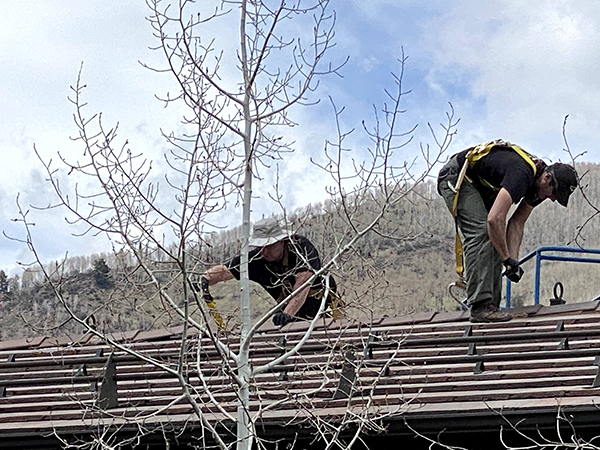 get bats out technicians performing bat remediation on a roof