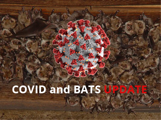do bats carry covid-19?